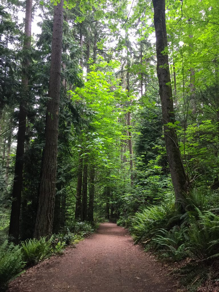 Here is a list of 5 great hikes near Seattle for absolute beginners. If you want to start hiking but are intimidated, start here. Also these are great for a quick afternoon walk because they are all in or very close to the city.
